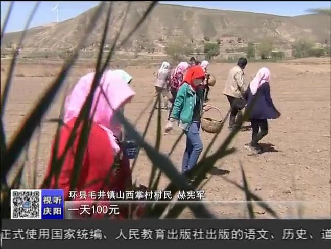 甘肃:环县调整种植结构发展中药材助农增收